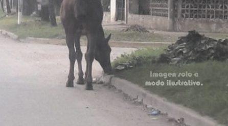 Insólito: equino se cruzó de vereda y motociclista se enganchó la soga