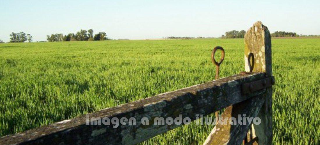 Secuestran herramientas agrícolas tras allanamiento en zona rural de Serrano