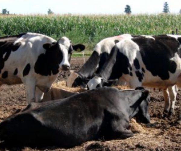 PIL para Asistente de Producción Agropecuaria creará mil oportunidades de empleo