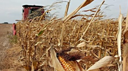 La provincia de Córdoba cerró la segunda mejor cosecha de su historia